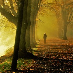 walking into golden times ( Peter & Ute Grahlmann ) Tags: art nature alley