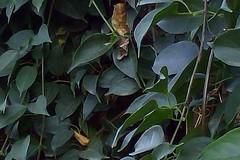 crop_6