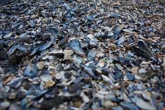Just broken clams (peladomal ) Tags: sea beach puerto uruguay mar playa clam clams puntadeleste puntaballena 2015 almejas