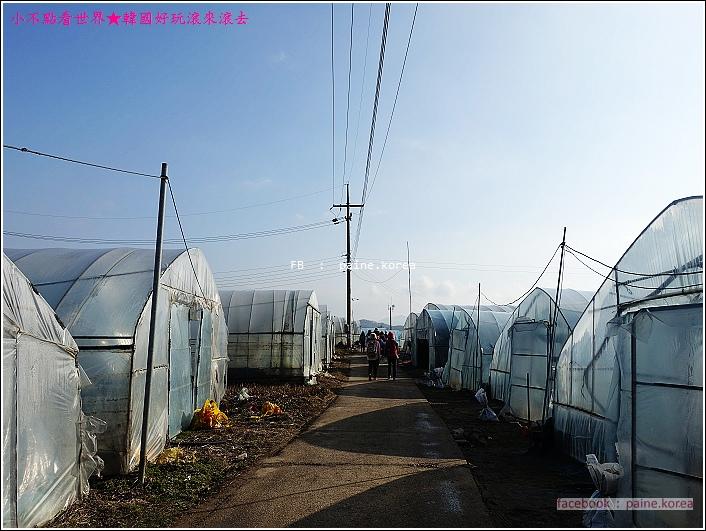 草莓園採草莓 (2).JPG