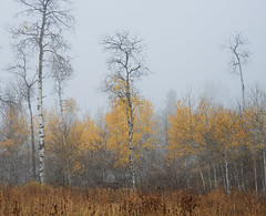 Fog & Aspens (Bonnie Bowne) Tags: grandteton tetons wyoming landscape fall