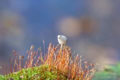 046 (Bongonation) Tags: mushroom mushrooms macro magic moss grass green lights life live forest forester
