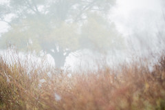 Autumn (gogos_yiannis) Tags: autumn tree fog mist nature flora greece