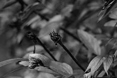 (lburnhope) Tags: sony a7 tokina blackandwhite monochrome