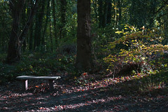Without You (Iain Blake66) Tags: aut116 bench woodland countryside