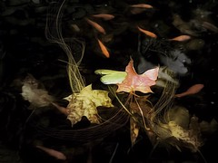 ( in explore ) (allyson.marie) Tags: leaves iphone art orange yellow nature fish water pond october autumn