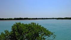 Mangrove Jungle In Qeshm Island (daniyal62) Tags: qeshm island mangrove jungle iran landscape nature sea xa1 xc1650mm fujifilm fuji wow