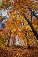 The Rise of Fall (Zsolt Zsigmond) Tags: forest trees woods fall autumn landscape landschaft foliage leaves bright walk picture flickr trail plant colours sky red yellow orange tree art light roots outdoor serene texture