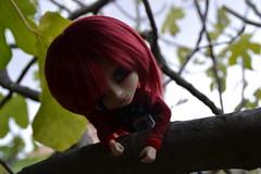 DSC_4655 (DollEmiou) Tags: doll pullip pullipfullcusto fc nezumi pullipsticafc obitsum wig red eyeships