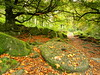 Autumn millstone (jeff.dugmore) Tags: peakdistrict derbyshire england national park rural forest tree morning autumn serene millstone outside green gold trees padley gorge leaves rocks moss path olympus nature sunlight outdoors walking hike relic