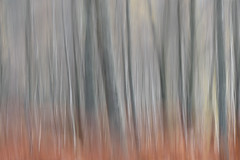 Undefined (George Pancescu) Tags: nikon d810 70200mm landscape forest panning nature outdoor tree trees scotland isleofskye