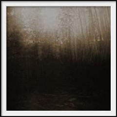 in the dark (Andrew C Wallace) Tags: icm blur forest sepia waterfall marysville victoria australia olympusomdem5 microfourthirds m43 heidemuseumofmodernart heidemakersmarket thephotontrap