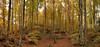 FORESTA DEL CANSIGLIO. N. 2 LARGE (FRANCO600D) Tags: foresta bosco alberi forestadelcansiglio casetta cottage autunno foglie prealpi smartphone italia italy italie bellitalia veneto altopianodelcansiglio franco600d