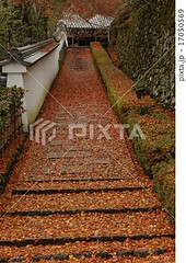 17050569 (finalistJPN) Tags: autumnleaves japanesegarden colors kyoto fall worldheritage discoverjapan japanguide visitjapan discoverychannel nationalgeographic stockphotos availablenow