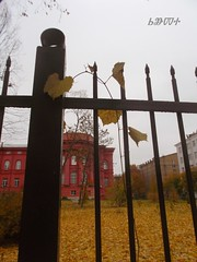 autumn mood (ruta / ) Tags: yellow red autumn urbannature wildgrapevine