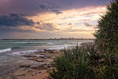 Pandanus Trees In The Sunset (k009034) Tags: 500px waves australia caloundra copy space queensland tranquil scene beach buildings bush city clouds evening leaves no people ocean oceania pandanus rocks sea sky sunset travel destinations water teamcanon