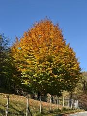 """Cromatografia dell'autunno (CortoMaltese83) Tags: autunno fall autumn natura nature colori colors nikon """"nikonflickraward"""" sunny sun ticino tessin switzerland svizzera bellinzona"""