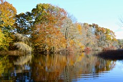 From the mini Dock (Read2me) Tags: autumn jacobspond trees leaves colorful orange cye she water reflection lake pond thechallengefactorywinner pregamewinner challenge club winner challengeclubwinner agcgwinner gamewinner