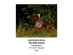 """The Wild Turkey • <a style=""""font-size:0.8em;"""" href=""""https://www.flickr.com/photos/124378531@N04/30811297060/"""" target=""""_blank"""">View on Flickr</a>"""