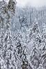 08.11.16   Hidden in Plain Sight (Jamie A. Hunter) Tags: canon canoneos5ds canonphotography canoninc eos 5ds 50mp ef24105mmf4lisusm usm 24105mm travel austria osterreich osterreichesbundesbahn austrianstaterailways mavstart ceskedrahy czechrepublic czechia hungary budapest prague trains railways stations siemens taurus es64u es64u2 es64u4 vectron pinzgauerlokalbahn zellamsee salzburg krimml krimmlerwassefalle