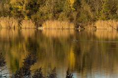 Balade automnale (Pautho) Tags: automne lac reflet 18250 sony