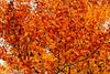 GattonP_DSC6393 (Nick Woods Photography) Tags: autumn autumncolours autumnleaves autumntrees autumntree goldenleaves autumngold vegetation