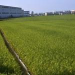 Rice Field thumbnail