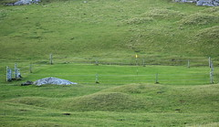 Green protection (Graham`s pics) Tags: barra barragolfclub golf golfcourse sport pastime grass green electricfence outerhebrides scotland fence