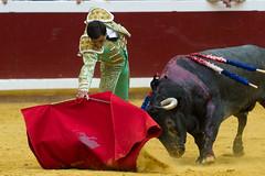 DSC_9338.jpg (josi unanue) Tags: animal blood spain bull arena bullfighter sansebastian esp toro traje asta sangre espada bullring unanue guipuzcoa matador torero tauromaquia sufrimiento cuerno urea banderilla banderilero