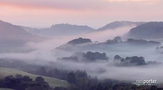 Moreton's Mist's