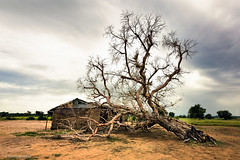 Fallen Tree (Irene Becker) Tags: africa niger village westafrica nigeria wawa blackafrica arewa northernnigeria nigerianimages nigerianphotos imagesofnigeria northnigeria borgulga kainjilake