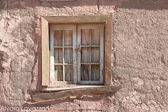 Inca de Oro (Alvaro Lovazzano) Tags: chile ventana atacama desierto copiapo desiertoflorido 2015 floweringdesert incadeoro