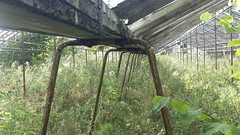 Abandoned Greenhouse 2 (Emearg Draw) Tags: abandoned greenhouses fruittrees clydevalley
