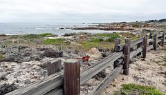 California-06601 - Asilomar State Beach (archer10 (Dennis) 159M Views) Tags: california usa sony unitedstatesofamerica free dennis jarvis pacificgrove asilomarstatebeach pointpinos iamcanadian freepicture dennisjarvis archer10 dennisgjarvis