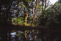 Salmon River Reservoir (colinpoe) Tags: trees wild reflections woods kodak rangefinder remote e6 provia100f fujiprovia100f medalist kodakmedalistii medalistii kodakmedalist ektarlens salmonriverreservoir