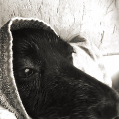 bath maggie (Lifeinpicture) Tags: life dog water bath picture maggie cutie shampoo et iphone4