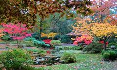 The Japanese garden (Frans Schmit) Tags: autumn trees japanesegarden denhaag thehague clingendael japansetuin fransschmit