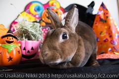 IMG_3420-1 (Rabbit's Album) Tags: pet rabbit bunny halloween animals  choco   minirex     canonx7i x7i sigma1750mmf28exdcoshsmcanon