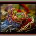 Tilltrasslad kaskad av färger/Tangled cascade of colors