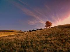Bumchen (Wunderlich, Olga) Tags: hgel baum rgen insel deutschland herbst landschaft natur landscape nature licht wolken