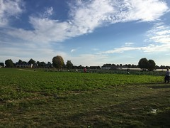 Champs - Cueillette de La Grange  Coubert (77) (stefff13) Tags: cueillette ferme grange pomme lgume fruit champs coubert
