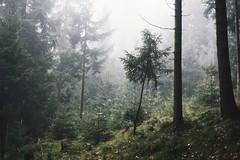 Calling out for me (desomnis) Tags: wood woods trees fog mist misty foggy nature photography landscapes naturephotography canon6d desomnis canon50mm haze autumn austria