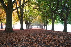 Perfection (Paul C Stokes) Tags: clifton parade bristol uk autumn leaves brown avenue trees carpetofleaves sony sonya7r a7r zeiss zeiss1635 1635 fog foggy mist misty morning conditions light green filterd