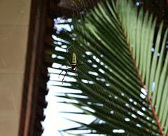 Spider-man (Petrisiela) Tags: garden spider webs net web naturalist natural earth life alive biodiversity nikon