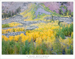 Early Fall Color (G Dan Mitchell) Tags: eastern sierra nevada mountains bishop canyon creek aspen color yellow red fall autumn rocky slope nature landscape california