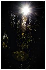 Morning Enchantment (beezelite) Tags: outdoor foliage ny nature nikon d7200
