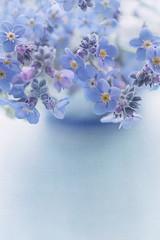 Blue (borealnz) Tags: flower forgetmenot blue soft vase window backlit