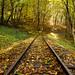 Erdei vasút - Forest railway
