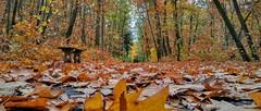 Park (maciey24) Tags: jesień autumn fall season poryroku poraroku liście park pabianicestrzelnica pabianice strzelnicapabianice ławka alejka alley path leaves trees drzewa drzewo tree color colour colorful kolorowy kolorowe kolorowo kolory rośliny plants nature przyroda strzelnica wolności