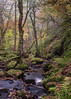Away (Aidan Mincher) Tags: padleygorge peakdistrict derbyshire gorge water stream rocks trees woodland wood autumn colours uk canon5dmk3 nature